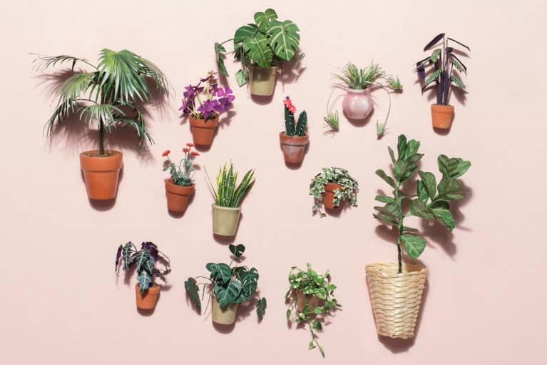 How To Up Your Plant Game This Spring — For Next-To-No $$