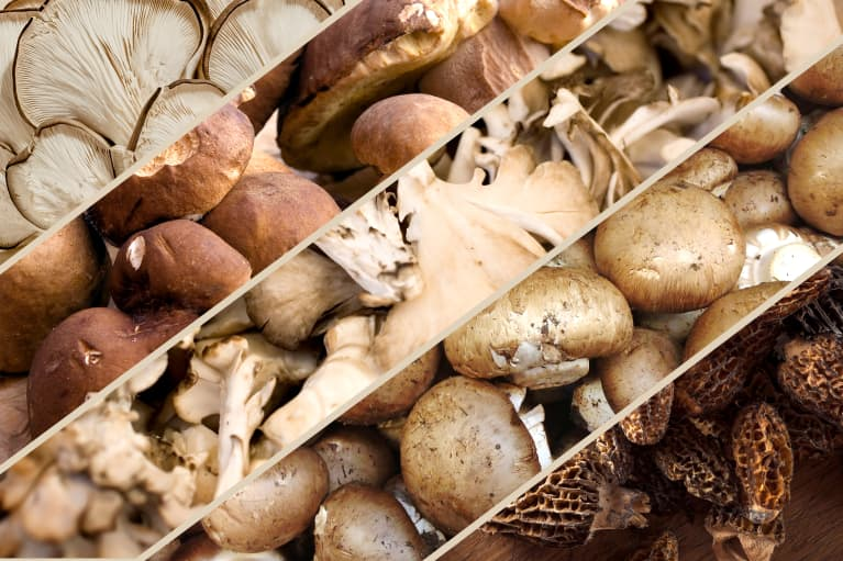 13 different types of mushrooms