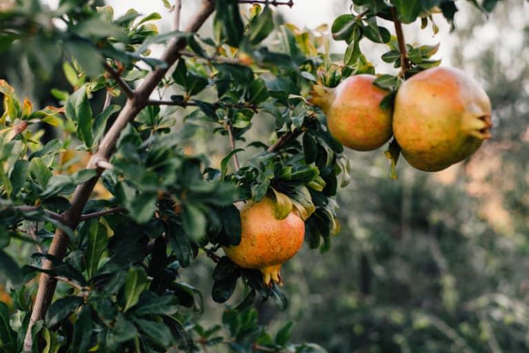 The 3 Mediterranean Ingredients This Nutritionist Always Pairs Together