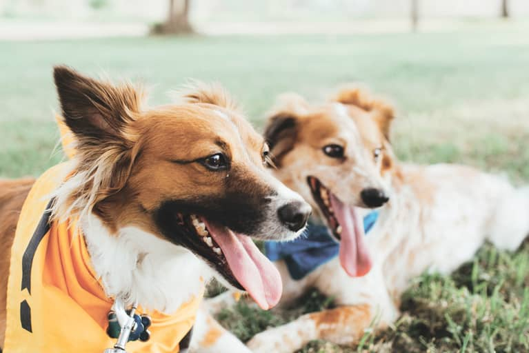 5 Reasons To Start Your Dog On A Raw Food Diet