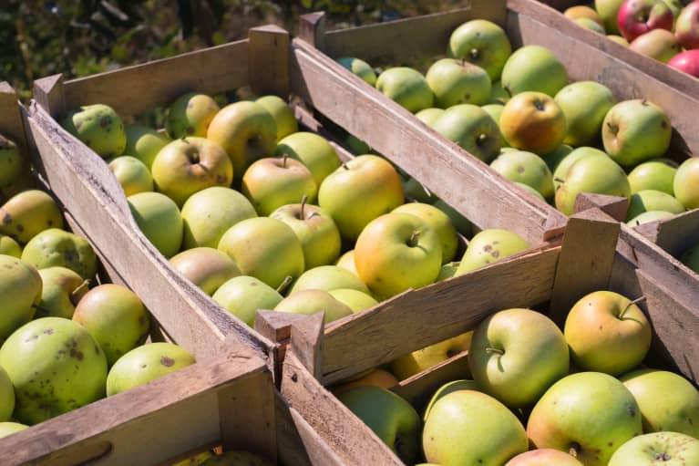Bushels Full of Apples