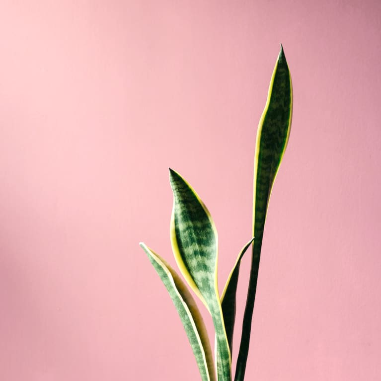 For Plump, Hydrated Skin This Winter, Stock Up On Houseplants
