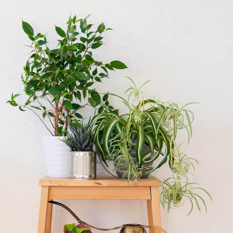 Detox Your Home With These 5 Easy Changes